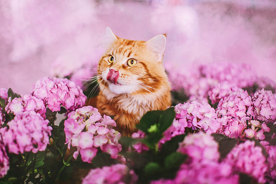 ginger-cat-photography-kotleta-cutlet-kristina-makeeva-hobopeeba-29