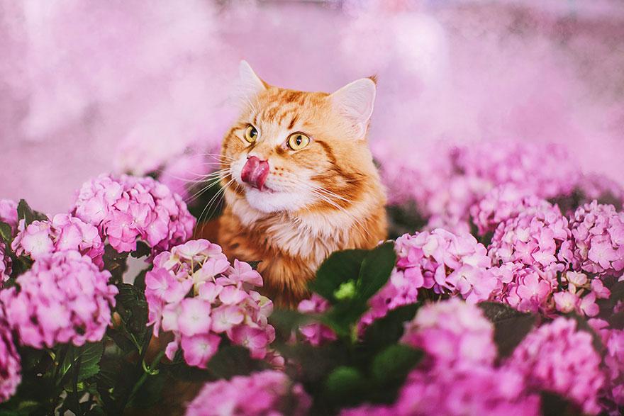 ginger-cat-photography-kotleta-cutlet-kristina-makeeva-hobopeeba-29