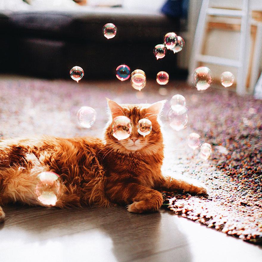 ginger-cat-photography-kotleta-cutlet-kristina-makeeva-hobopeeba-38