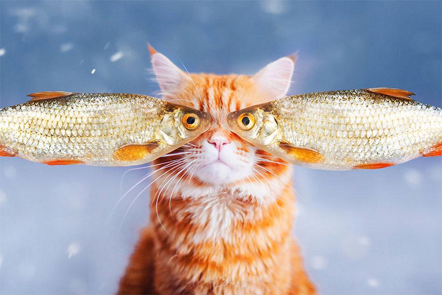 ginger-cat-photography-kotleta-cutlet-kristina-makeeva-hobopeeba-4
