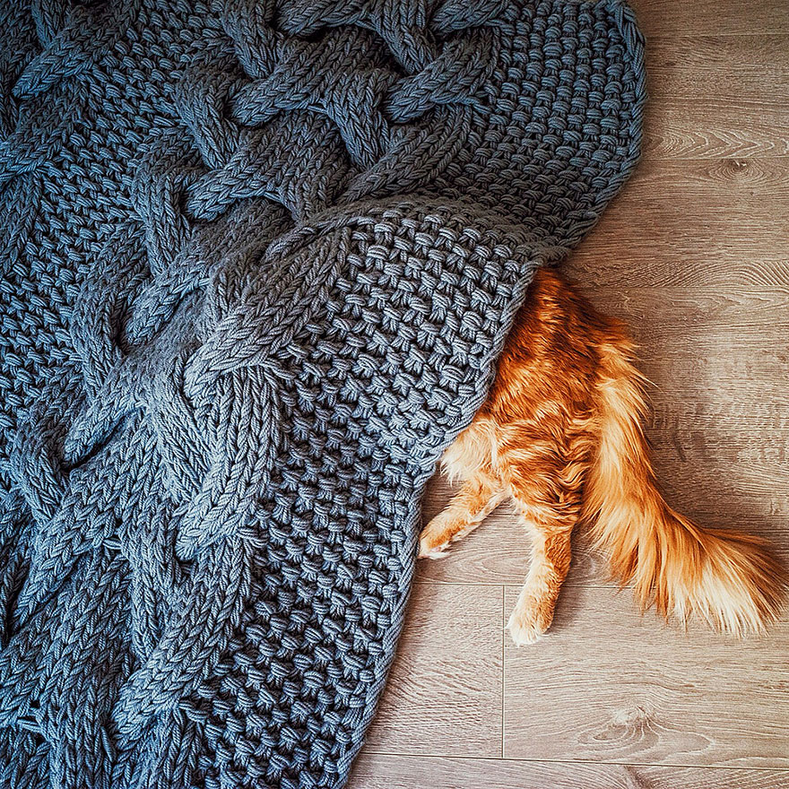 ginger-cat-photography-kotleta-cutlet-kristina-makeeva-hobopeeba-40