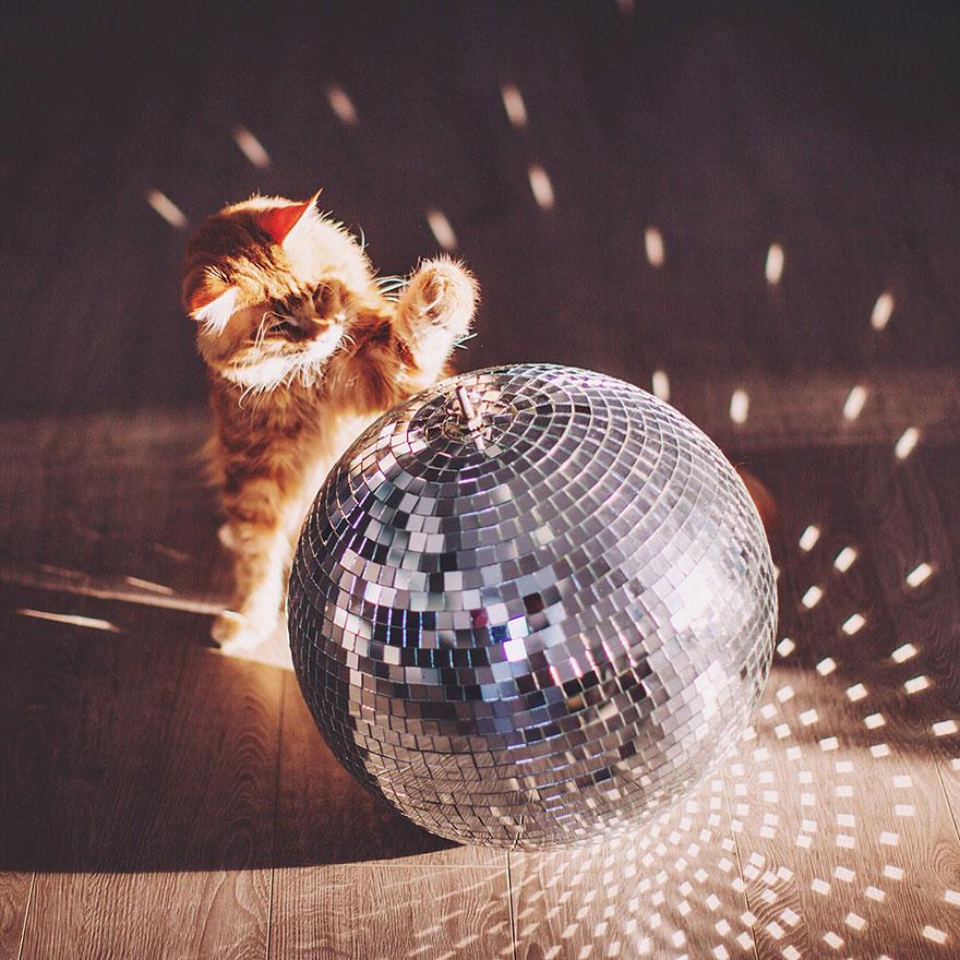ginger-cat-photography-kotleta-cutlet-kristina-makeeva-hobopeeba-43
