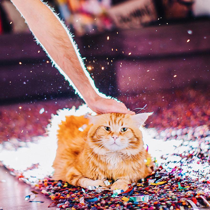 ginger-cat-photography-kotleta-cutlet-kristina-makeeva-hobopeeba-46
