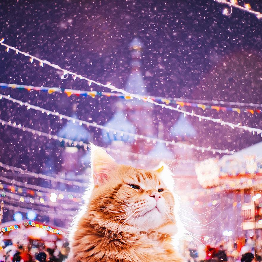 ginger-cat-photography-kotleta-cutlet-kristina-makeeva-hobopeeba-48