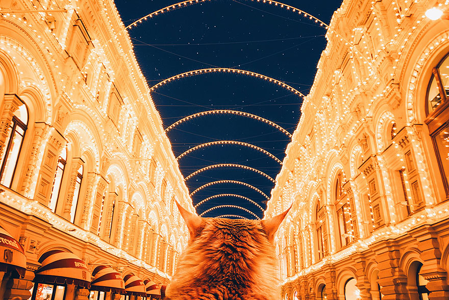 ginger-cat-photography-kotleta-cutlet-kristina-makeeva-hobopeeba-49
