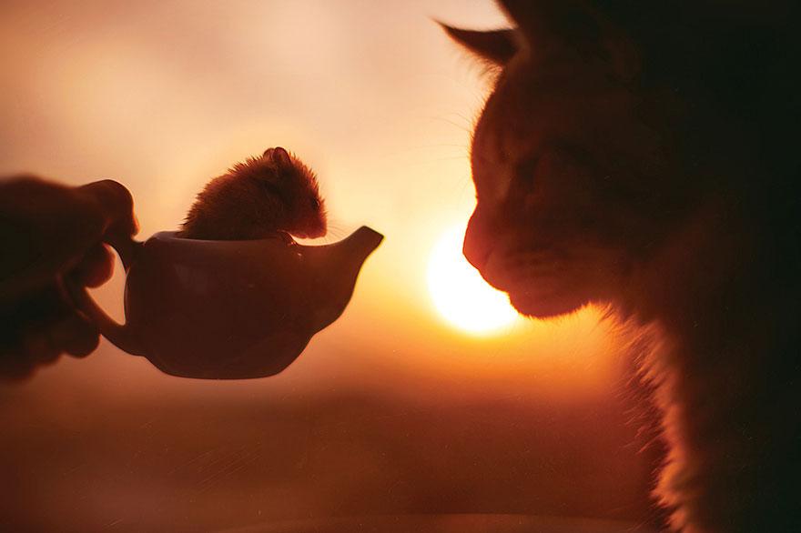 ginger-cat-photography-kotleta-cutlet-kristina-makeeva-hobopeeba-50
