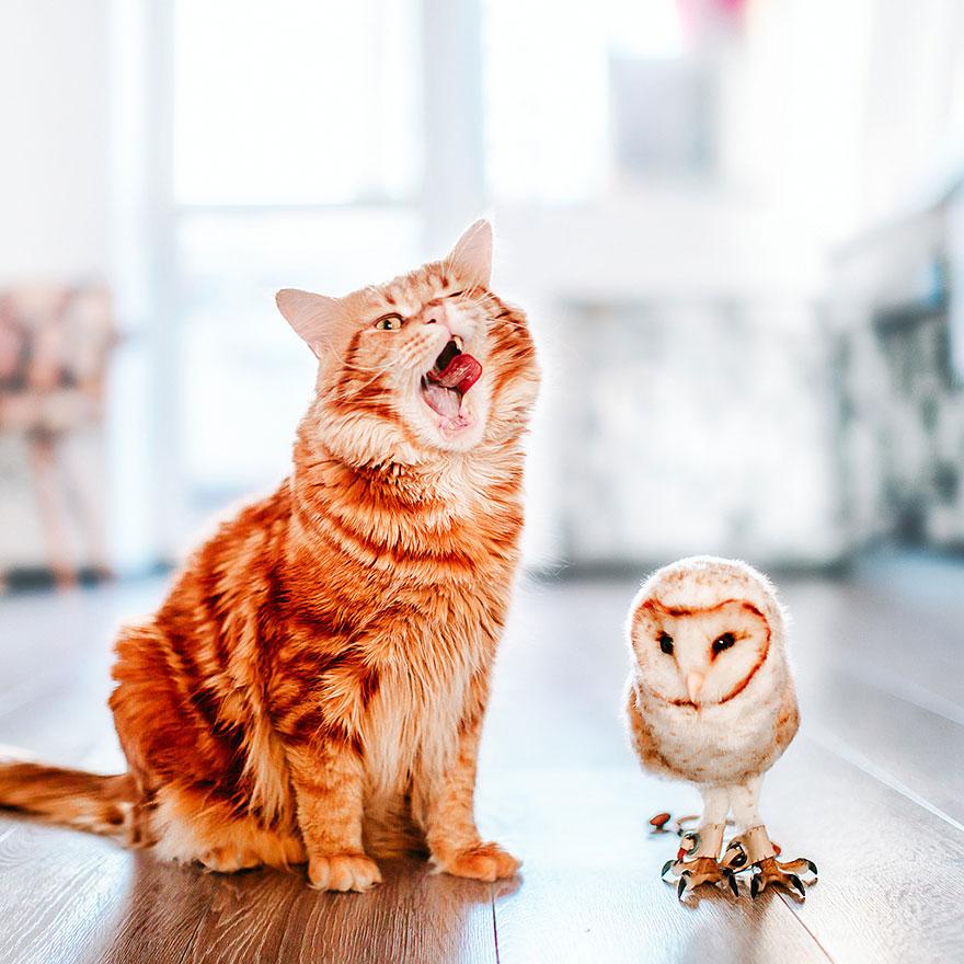 ginger-cat-photography-kotleta-cutlet-kristina-makeeva-hobopeeba-51