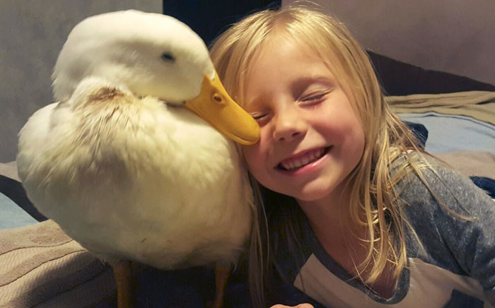 5-Year-Old Girl Has A Duck Best Friend Who Follows Her Everywhere And Thinks She's His Mom