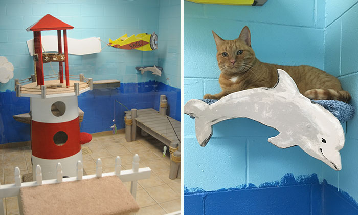 I Created A Harbour-Themed Cat Room For Shelter Cats To Brighten Their Days