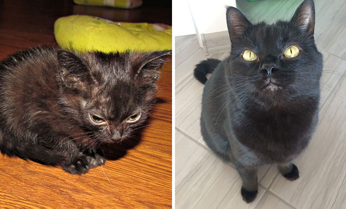 Batman The Cat Had A Rough Start Of His Life But Now Lives A Happy Life