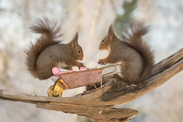 I Photographed Wild Red Squirrels Celebrating Easter