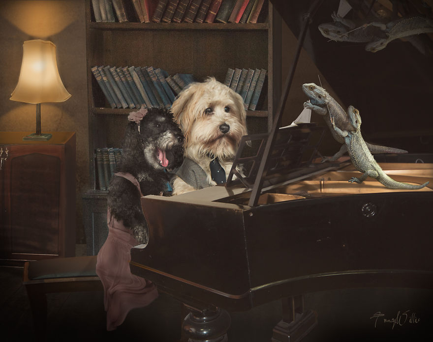 I Create Surreal Photos Of My Pets Using Photoshop