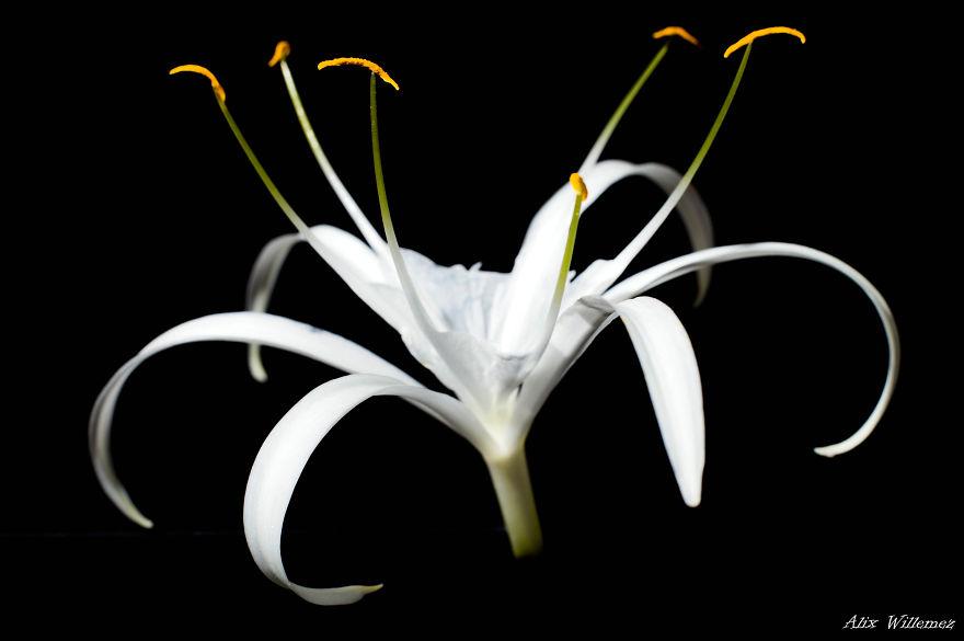 photographe amateur vis en Nouvelle,Calédonie, une petite île dans le Pacifique Sud, où il y a des fleurs magnifiques.