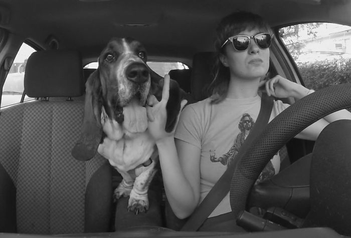 I Filmed My Basset Hound Carpooling With Me To And From Work Everyday For A Month