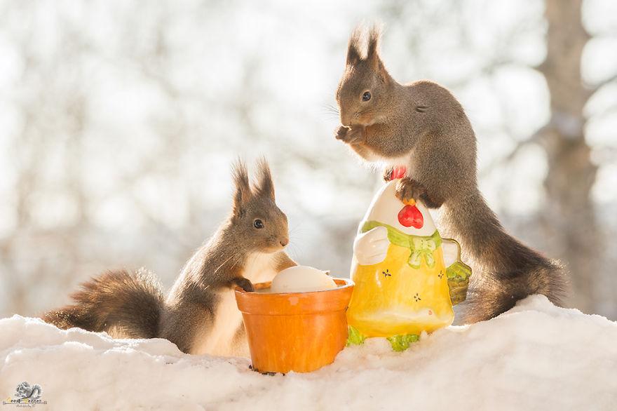 I photographed wild red squirrels celebrating easter bored panda - Celebrating home designer login ...