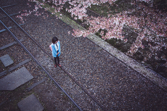 I Traveled To Japan And Photographed The Cherry Blossoms