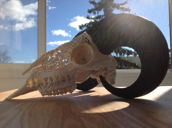 I Use Skulls As Canvases For My Art
