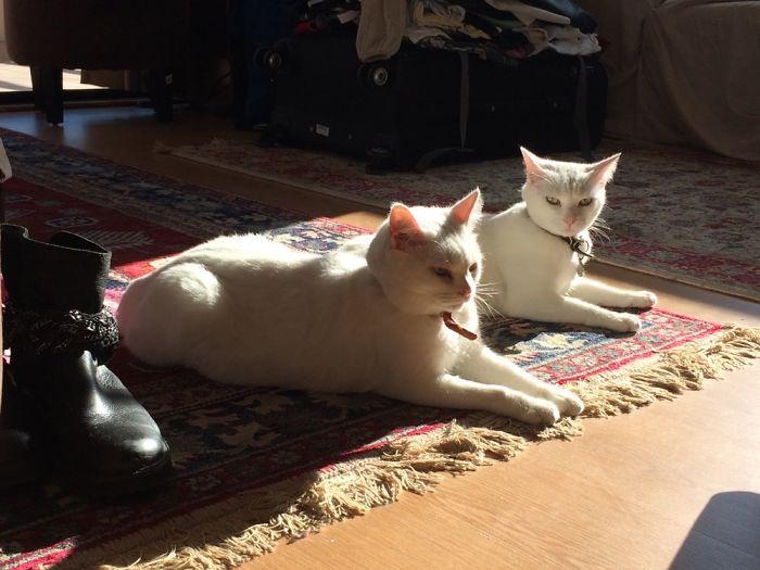 Sun-and-carpet-loving Cats