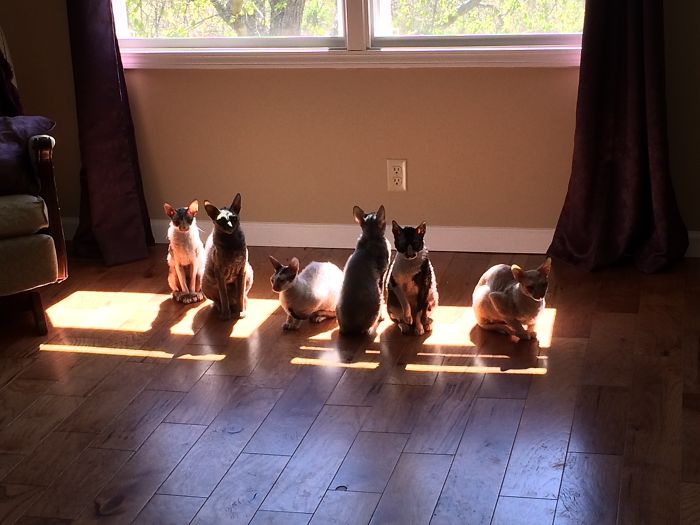My Sun Worshippers