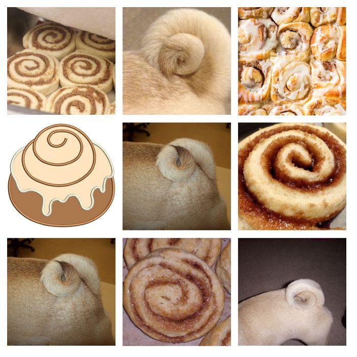 Pug Tail Or Cinnamon Bun?