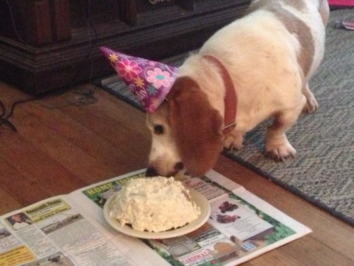 Buford Enjoying His Birthday
