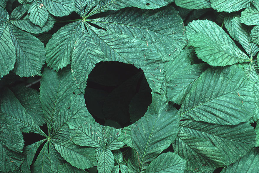 [Reflexion] Les oeuvres qui vous inspirent - Page 4 Land-art-andy-goldsworthy-121
