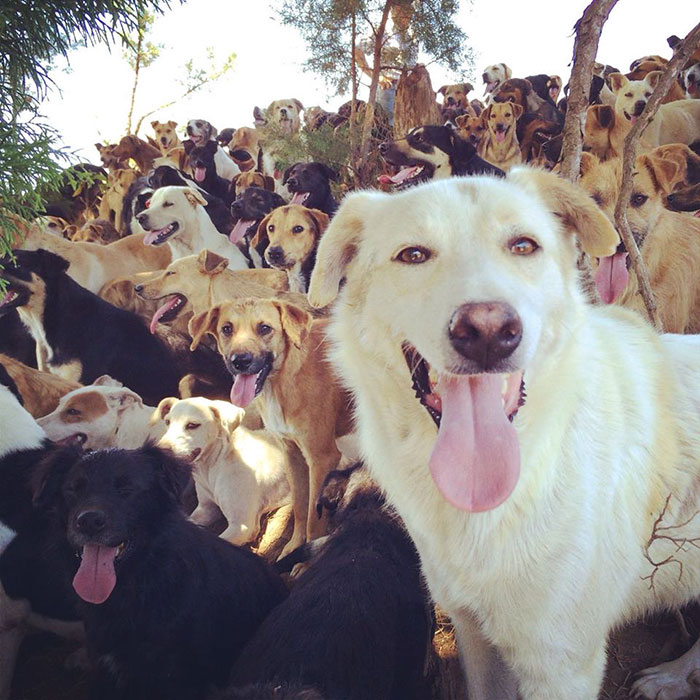 land-of-stray-dogs-territorio-de-zaguates-costa-rica-10