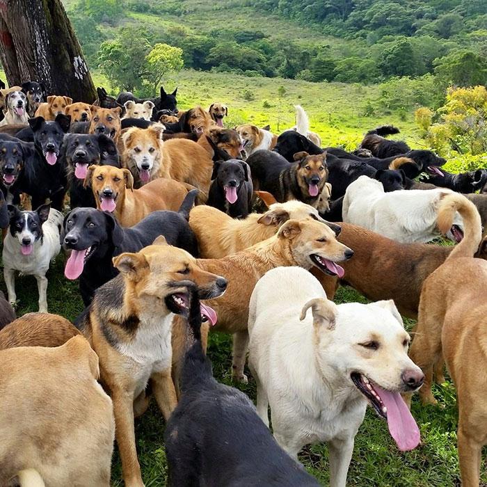 Stray Dog Breed Singapore