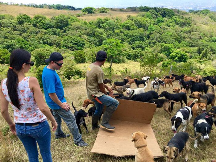 land-of-stray-dogs-territorio-de-zaguates-costa-rica-14