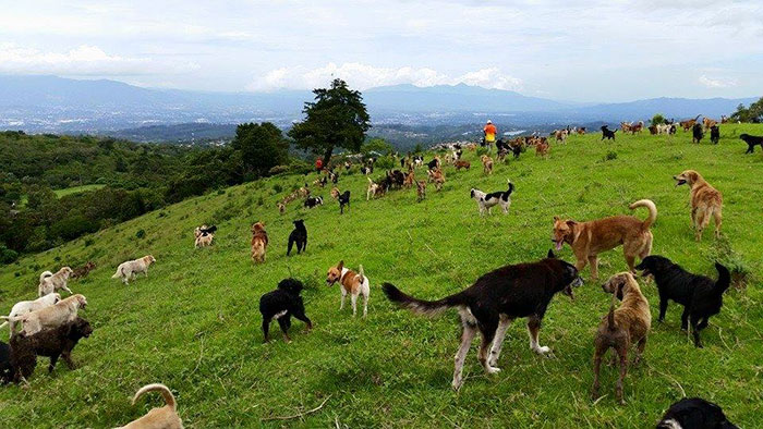 land-of-stray-dogs-territorio-de-zaguates-costa-rica-2