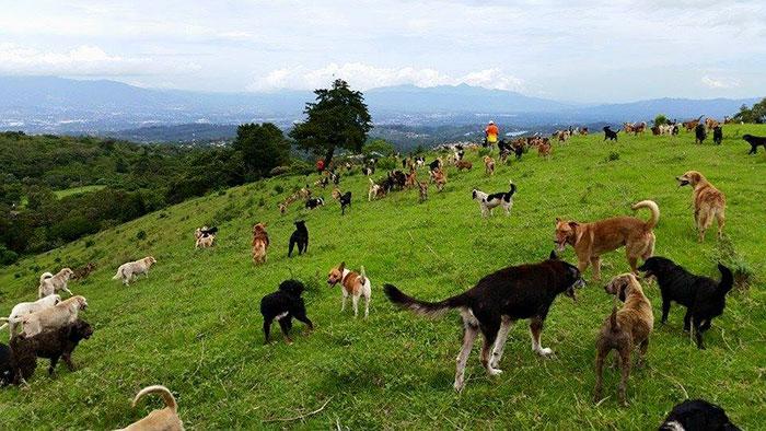 land-of-stray-dogs-territorio-de-zaguates-costa-rica-2