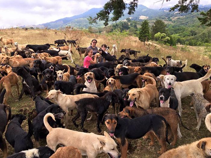 land-of-stray-dogs-territorio-de-zaguates-costa-rica-4