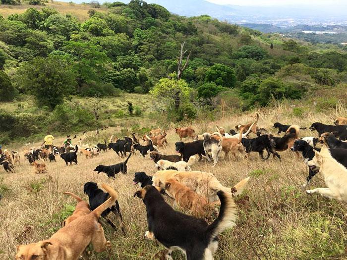 land-of-stray-dogs-territorio-de-zaguates-costa-rica-6