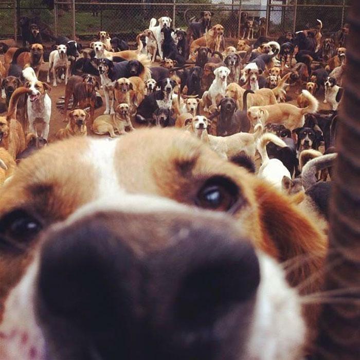 land-of-stray-dogs-territorio-de-zaguates-costa-rica-7