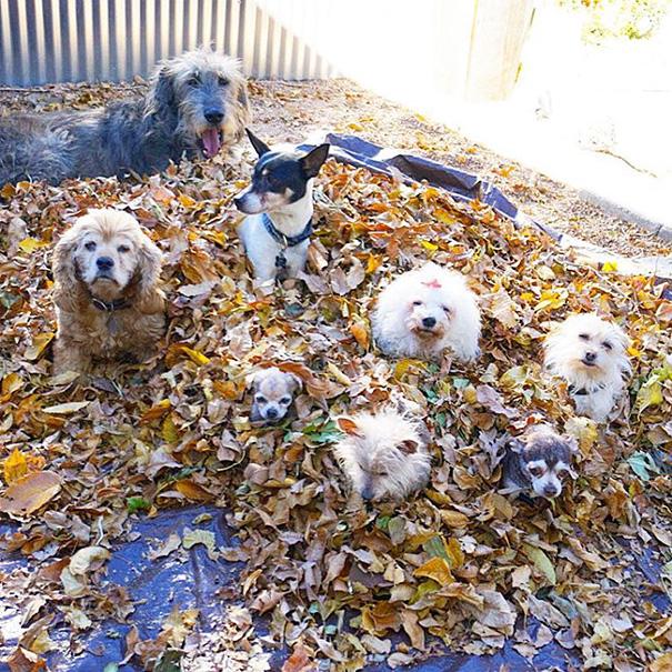 man-adopts-senior-dogs-shelter-steve-greig-102