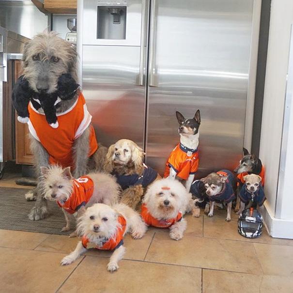 man-adopts-senior-dogs-shelter-steve-greig-125