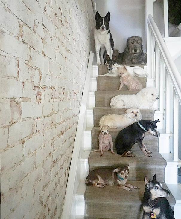 man-adopts-senior-dogs-shelter-steve-greig-52