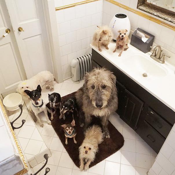 man-adopts-senior-dogs-shelter-steve-greig-58