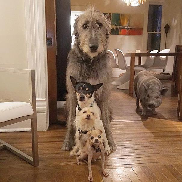 man-adopts-senior-dogs-shelter-steve-greig-93