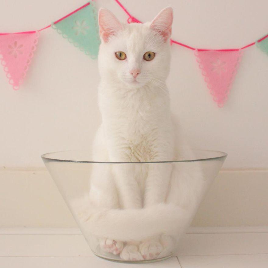 Meet Zappa, Our Liquid 'Bowling' Cat
