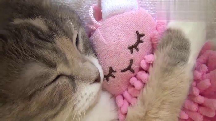 Mimi Kitten With Her Pink Friend