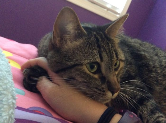 My Cat Likes To Hold My Hand Whenever We Cuddle