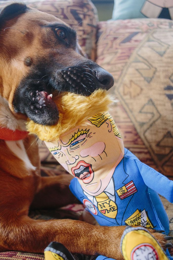 My Dog Roughing Up Donald!