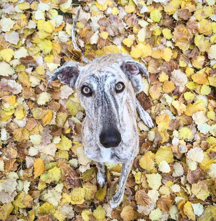 My Greyhound And I Have Set Out To Change The Destiny That This Breed Suffers In Spain