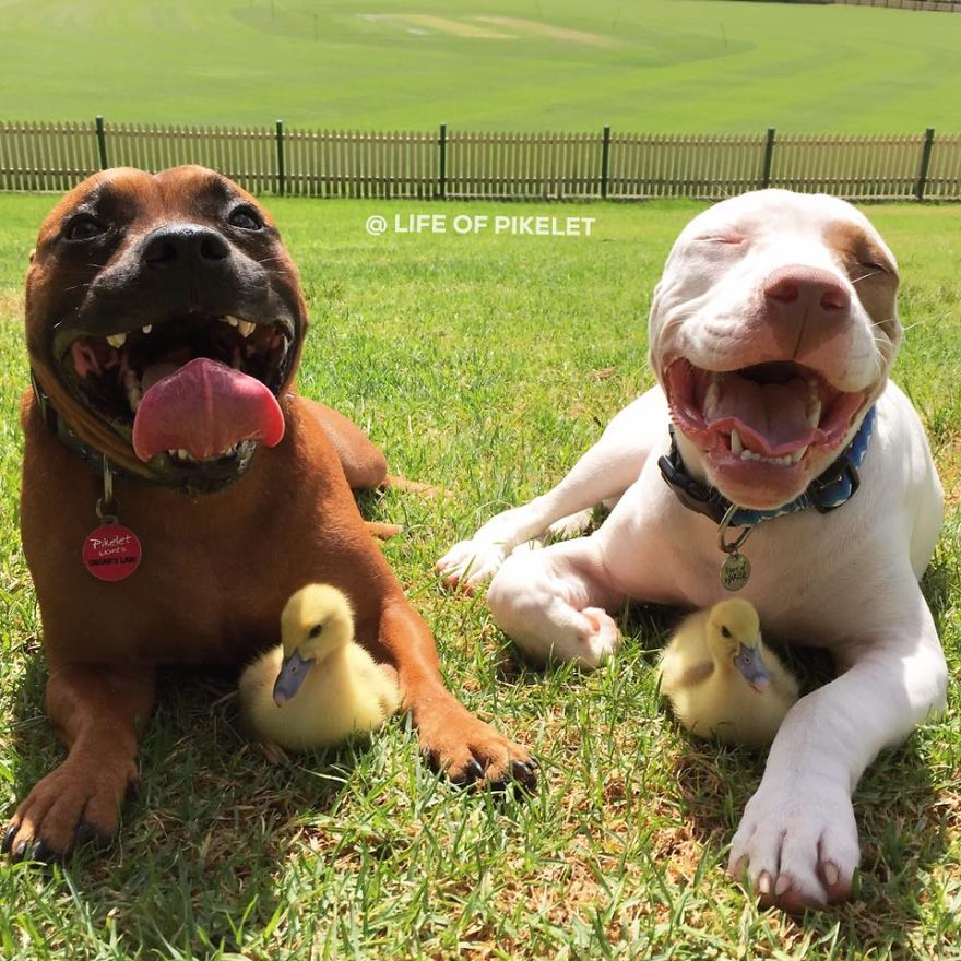 Forever Friends Pet Rescue Dogs For Adoption