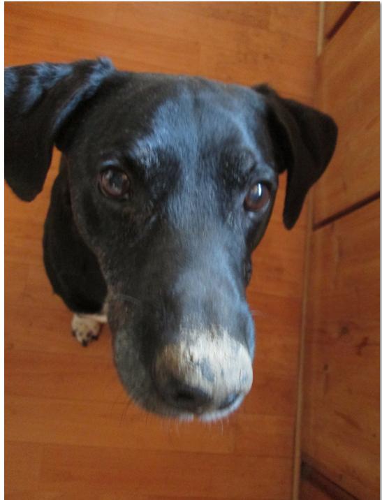 nasenhund7.png