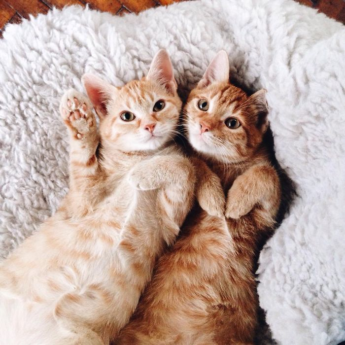 Pair Of Rescued Kittens Are Inseparable And Utterly Adorable
