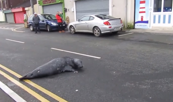 seal-crosses-road-seafood-restaurant-sammy-ireland-5