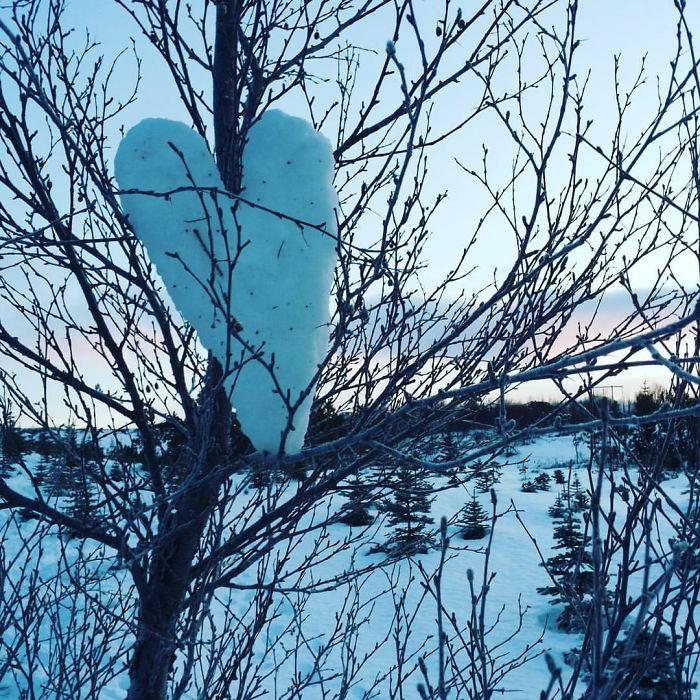 Snow Heart In A Birch Tree