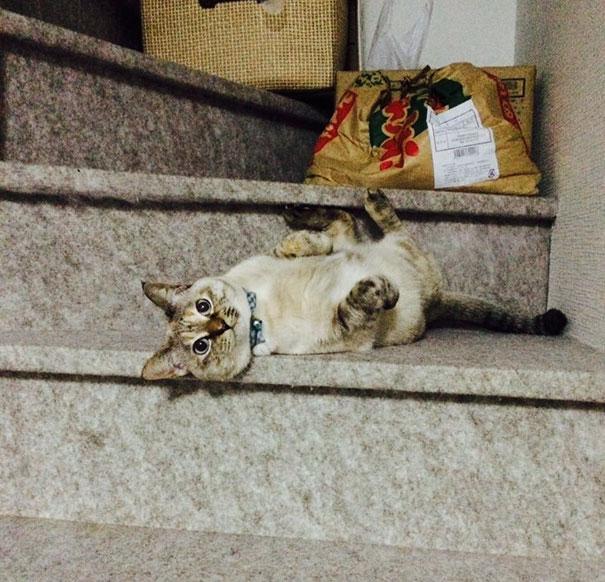 stray-cat-chooses-owner-vell-kawasaki-hina-1